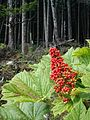 Tongass National Forest 04.jpg