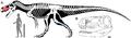 Torvosaurus gurneyi.png