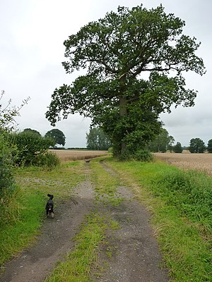 Weald Moors - The Birch Moors, near the hamlet of Adeney.