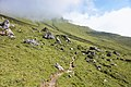 Trail in Tux Alps.jpg