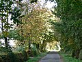 Tree-lined road - geograph.org.uk - 61919.jpg