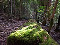 Tree Fall Barrington Tops.jpg