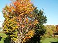 Trees - panoramio (1).jpg