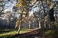 Trees Starting To Look Bare - panoramio.jpg
