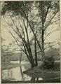 Trees and shrubs of Prospect park (1906) (14783385382).jpg