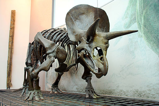 Triceratops Skeleton Senckenberg