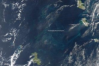 Trichodesmium - Trichodesmium erythraeum bloom, between Vanuatu and New Caledonia, SW Pacific Ocean.