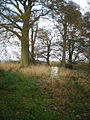 Trig point at 96m in the copse - geograph.org.uk - 1574121.jpg