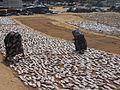 Trockenfisch Negombo.jpg