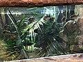 Tropical World Piranha.jpg