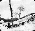 Troupeau de brebis en hiver, environs de Luchon.jpg