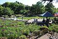 Tsuruma Park 20170527-22.jpg