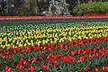 Tulip Gardens , Kashmir.jpg