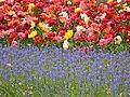 Tulips in Keukenhof 4.jpg