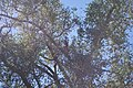 Tumacacori NHS DSC 0842 (15483880468).jpg