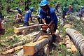 Turning palm trees felled by Typhoon Haiyan into timber for reconstruction (13957580749).jpg