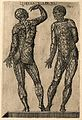 Two male figures, seen from the front and back, with the cut Wellcome V0007742EL.jpg