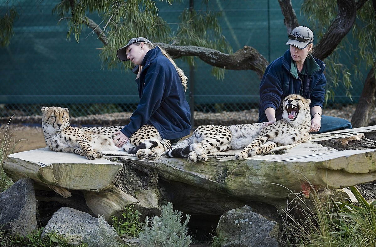 Gardien de zoo wikip dia - Formation de gardien d immeuble gratuite ...