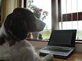 Typing dog.JPG
