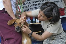 U.S. Army Capt. Natalie Spiliopoubs, right, gives medication to a dog during the Medical Readiness Training Exercise (MEDRETE) portion of Beyond the Horizon 2013 in Cantina, Panama, May 29, 2013 130604-Z-PQ189-0279