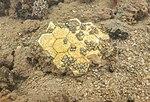 USS Arizona galley floor tiles.jpg