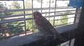 Unknown Bird -11.png