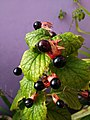 Unknown Plant Yet (1).jpg