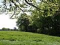 Uppaton Plantation - geograph.org.uk - 421894.jpg