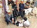Uyghur family with two calves for sale at Kashgar market.jpg