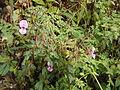 Valley of Flowers 07.JPG