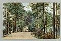 Vanha harjutie, Kuikonniemi, Palovartijan mäki, Pöllänlampi, Mustalahti, Signe Brander 1901 PK0370.jpg