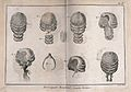 Various styles of wigs. Engraving by R. Bénard. Wellcome V0019616.jpg
