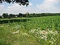View across sugar beet field - geograph.org.uk - 895393.jpg