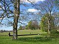 View of Petworth Park 1.JPG