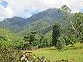 View to Mt Curi from Sabaun area, Timor-Leste 13 Apr 2013.jpg