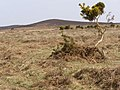 View towards Hallickshole Hill from Latchmore Bottom, New Forest - geograph.org.uk - 157261.jpg