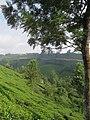 Views around Munnar, Kerala (111).jpg