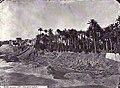 Vista general d'Elx, País Valencià, 1858, J. Laurent.jpg