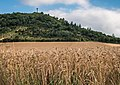 Vitoria - Olarizu - Campo de cereal 01.jpg
