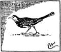 Vogelvonewittich.png