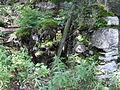 Vylet k Cernemu jezeru Sumava - 9.srpna 2010 185.JPG