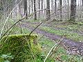 Waldweg in der Nähe von Gärtringen - panoramio.jpg