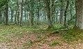 Wandelen over de Planken Wambuis vanuit Mossel 057.jpg