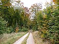 Wanderweg im Soonwald Nähe Thiergarten - 08.10.08 - panoramio.jpg