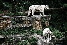 Schiffbruch Mit Tiger Pdf