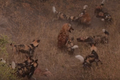 Wild Dogs Attack Spotted Hyenas to Defend Their Kill HD 1.png