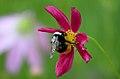 Wild Flowers of Gorikot.jpg