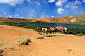 Wild Horses at Rano Raraku - Easter Island (5955842167).jpg