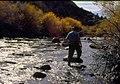 Wild trout project e walker river bridgeport0105 (26002918040).jpg