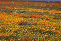 Wildflower Collage (3380406926).jpg